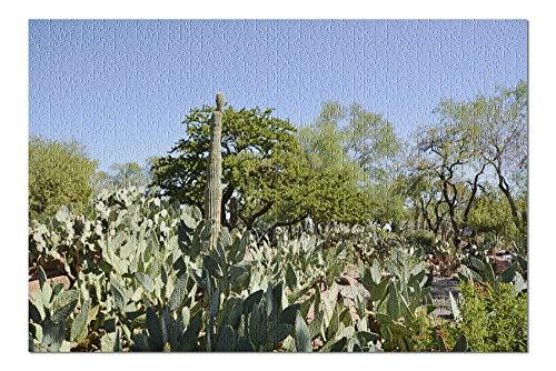 Henderson, Las Vegas - Cactus Garden - Photography A-94770 (20x30 Premium 1000 Piece Jigsaw Puzzle, Made in USA!)