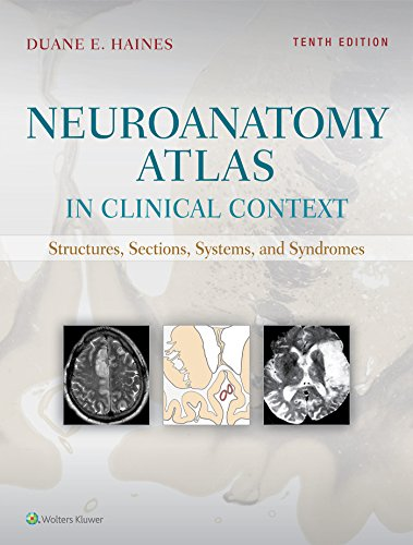 Pdf Medical Books Neuroanatomy Atlas in Clinical Context: Structures, Sections, Systems, and Syndromes