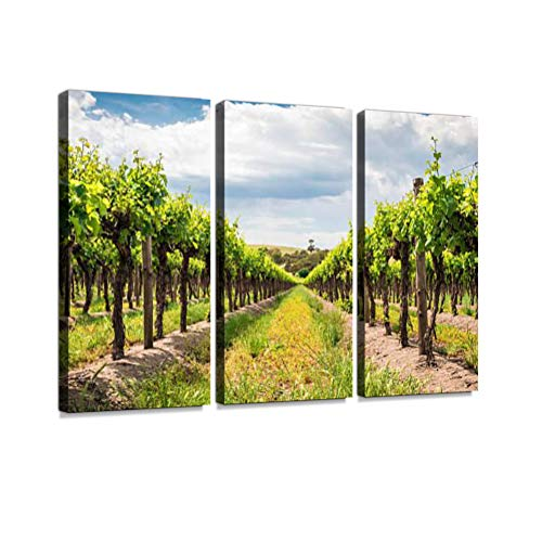 7houarts Grape Vines in Barossa Canvas Wall Artwork Poster Modern Home Wall Unique Pattern Wall Decoration Stretched and Framed - 3 Piece