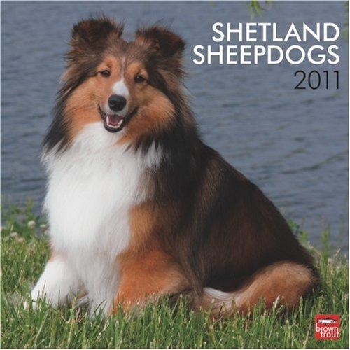Sheepdog 2011 Calendar - Shetland Sheepdogs 2011 Square 12X12 Wall