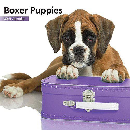Boxer Puppies Mini Calendar 12 Month 2016
