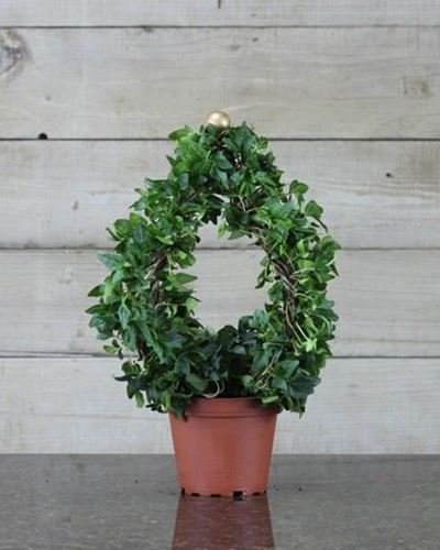 Ivy Russian Globe (Globe Topiary)