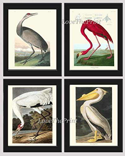 - Bird Print Set of 4 Art Beautiful James Audubon Hooping Crane Pink Flamingo American Pelican Birds Illustration Home Room Decor Wall Art Unframed GJ