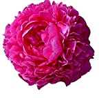 SPECIAL SALE: Kansas Peony - Early Double Red - Bare Root 3-5 Eyes