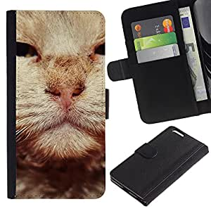British Wirehair Cat Orange Whiskers - la tarjeta de Crédito Slots PU Funda de cuero Monedero caso cubierta de piel Apple (5.5 inches!!!) iPhone 6+ Plus / 6S+ Plus