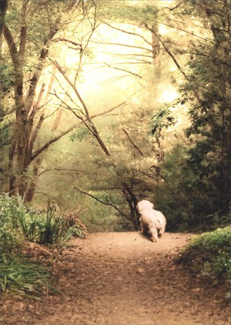 - White Dog On Path Pet Sympathy Card
