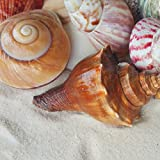 "Tumbler Home Polished Sea Shells – Sizes 2.25"" to 4"" - Approx. 20 Beach Shells in Mixed Colors – 1.75 Lb Nautical Beach Décor"