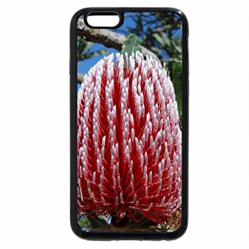 iPhone 6S / iPhone 6 Case (Black) RED BANKSIA