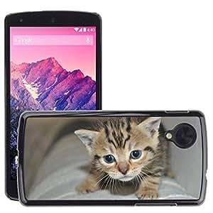 Hot Style Cell Phone PC Hard Case Cover // M00109735 Kitten Small Cat Animals Cat Portrait // LG Nexus 5