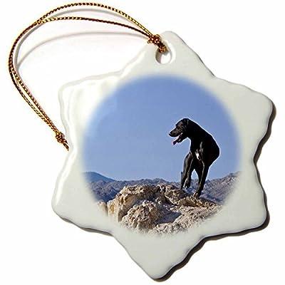 Ornaments to Paint Danita Delimont - Dogs - A black German Shorthaired Pointer dog - US ZMU3 - Zandria Muench Beraldo -