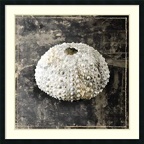 Framed Art Print 'Marble Shell Series I' by Edward Selkirk: Outer Size 40 x 40