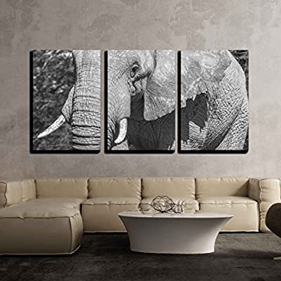 Wonderful Expertise, Close Up Portrait of an Elephant in Black and White x3 Panels, That's 100% USA Made