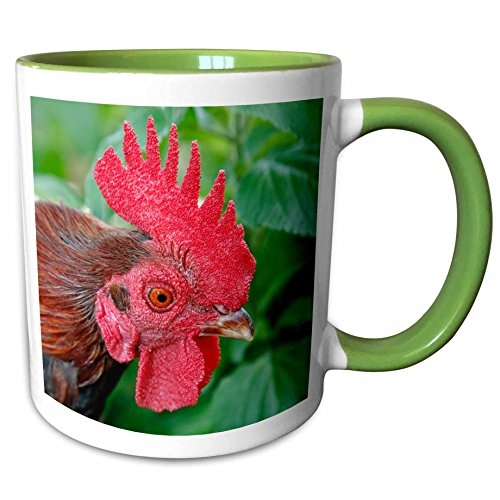 3dRose Danita Delimont - Texas - Kronkoskys Tiny Tot Nature Spot, San Antonio Zoo, TX - US44 AJE0109 - Adam Jones - 11oz Two-Tone Green Mug - Tx Outlets Antonio San