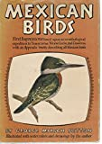 img - for Mexican Birds, First Impressions: Based upon an Ornithological Expedition to Tamaulipas, Nuevo Le n, and Coahuila with an Appendix Briefly Describing all Mexican Birds book / textbook / text book
