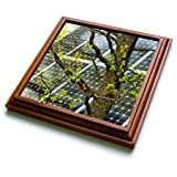 3dRose Alexis Photography - Objects - Oak tree with fresh leaves, solar power panel in the background - 8x8 Trivet with 6x6 ceramic tile (trv_290827_1)