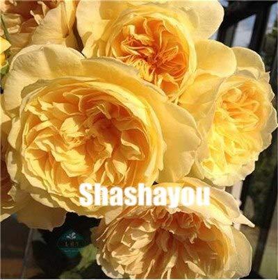Fiori Gialli Perenni.Bloom Green Co 100 Pezzi Misti Piante Perenni Cinese Rosa Rosa