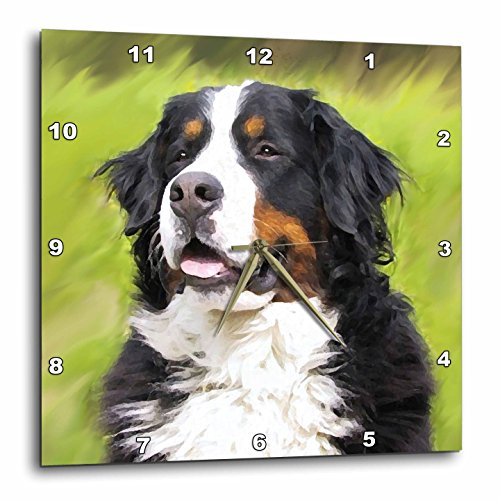 3dRose Bernese Mountain Dog Wall Clock, 10 by 10-Inch