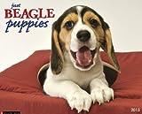 Beagle Puppies 2013 Wall Calendar (Just (Willow Creek))
