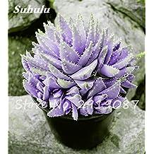 New! 20 Pcs Colorful Cactus Rebutia Variety Mix Exotic Aloe Seed Cacti Rare Cactus Office Edible Beauty Succulent Bonsai Plant 1