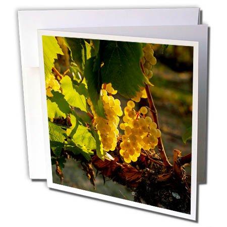 3dRose Danita Delimont - Vineyards - Usa, Washington, Yakima Valley. Harvest in the French Creek vineyard. - 6 Greeting Cards with envelopes (gc_260519_1) ()