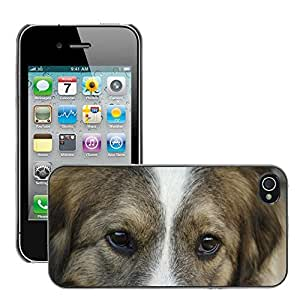 Super Stella Slim PC Hard Case Cover Skin Armor Shell Protection // M00145101 Dog Animals Man'S Best Friend Pets // Apple iPhone 4 4S 4G