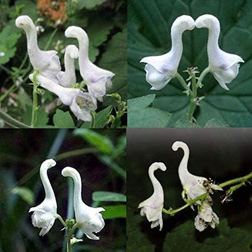 SOOGGI 100粒 白鳥の花の種 きれいに咲く 植物種子 花 有機 観葉植物 高い発芽率 簡単な栽培 ホームガーデンの装飾