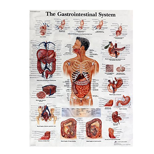 CLAKION Digestive System Anatomy Teaching Poster, Human Body Digestive System(60 x 80cm)