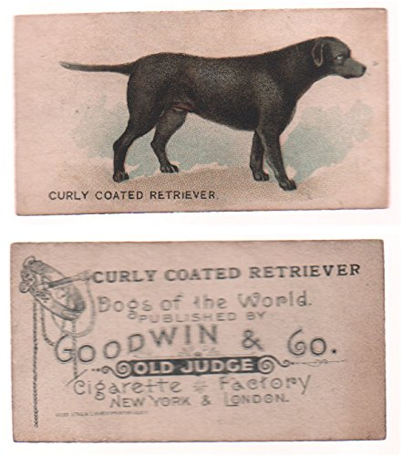 1890 Goodwin & Co. N163 Dogs of the World (Non-Sports) card#13 Curly Coated Retriever of the Grade Excellent ()