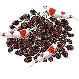 SunGrow Alder Cones for Shrimps, 0.5-1
