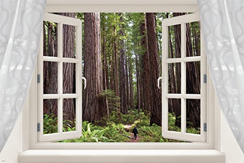 REDWOODS SEQUOIA scenic window poster TALL TREE GROVE unique new 24X36 GEM (not a decal)