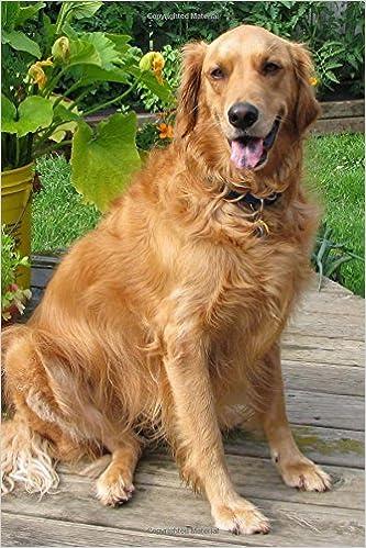 Buy Happy Golden Retriever Dog Portrait Journal Lined Notebook