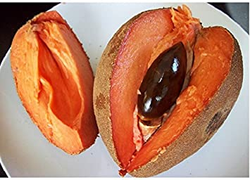 Picture Of Mamey Sapote
