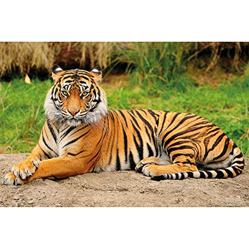 - Great Art Wall Decoration Tiger Photo Wallpaper - Majestic Tiger Mural Wild Animal Poster Fierce Cat Decor Jungle Hunter (55 Inch x 39.4 Inch)