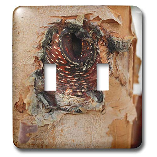 (3dRose Stamp City - nature - Close up photo of the bark of a river birch resembling an angry bird. - Light Switch Covers - double toggle switch (lsp_301356_2))