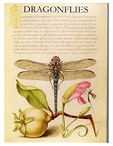 Card Note Dragonfly - Dragonflies: Boxed Set of 16 Note Cards with Envelopes