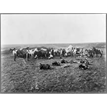 1906 Photo Hobbling horses cowboys hobbling horses within a makeshift rope enclosure. To the right a man stands next to a chuck wagon with a large slab of beef. The foreground is strewn with saddles.