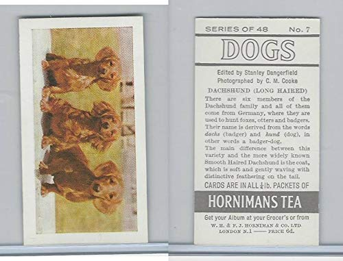 Dogs, 1961, 7 Dachshunds Long Haired ()