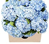 Blooms2Door 30 Blue Hydrangeas (Farm-Fresh, Naturally Colored, Premium Quality)