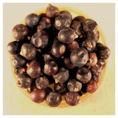 Juniper Berries - 10 lbs Bulk