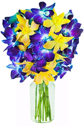Fireflies at Midnight Bouquet of Exotic Orchids from Thailand: 5 Blue Dendrobium Orchids & 5 Yellow Dendrobium Orchids with Free Vase Included -