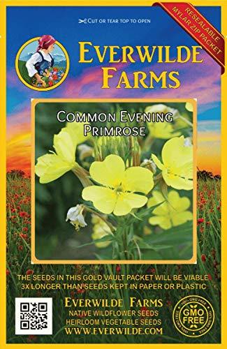 Everwilde Farms - 2000 Common Evening Primrose Wildflower Seeds - Gold Vault Jumbo Seed Packet - Primrose Farm