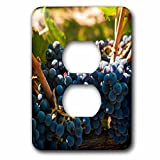 3dRose LSP_260510_6 USA, Washington, Red Mountain. Petit Verdot Grapes in a Vineyard Plug Outlet Cover,