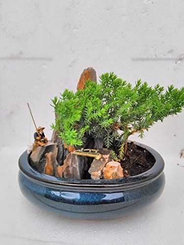 jmbamboo-bonsai- Juniper Tree Zen Garden With Pool Fishman by JM BAMBOO