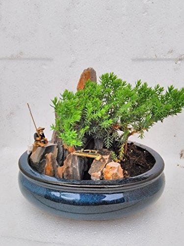 jmbamboo-bonsai- Juniper Tree Zen Garden With Pool Fishman (Fisherman Bonsai)