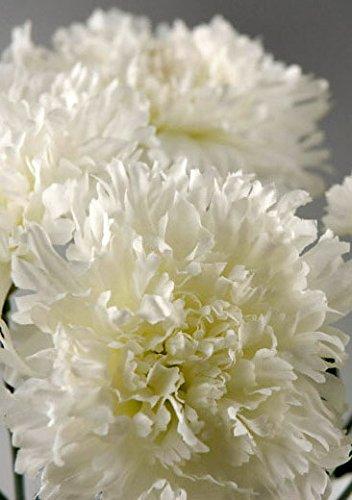 Wayfair One Dozen White Silk Carnations
