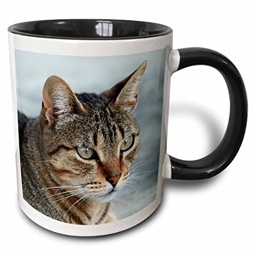 Black Tabby Cat - 3dRose 16934_4 Tabby Cat Portrait Ceramic Mug 11oz Black/White
