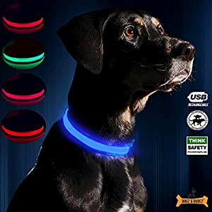 Dogz & Dudez USB Rechargeable LED Dog Collar (Neon Blue, S-31-41 cm)