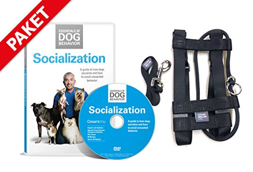 Cesar-Millan-Illusion-Collier-et-laisse-dentranement-crs-par-lentraneur-amricain-Cesar-Millan-DVD-Essentials-of-Dog-Behavior-sur-les-bases-de-la-socialisation-et-de-lducation-canine-franais-non-garant