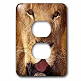 3dRose lsp_84672_6 Africa Male African Lion Na02 Swe0033 Stuart Westmorland Light Switch Cover