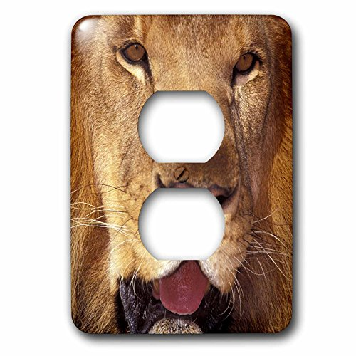 3dRose lsp_84672_6 Africa Male African Lion Na02 Swe0033 Stuart Westmorland Light Switch Cover by 3dRose